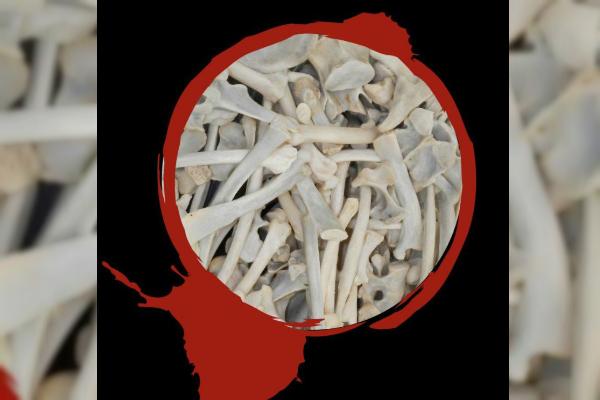 huesos de leon son usados en asia