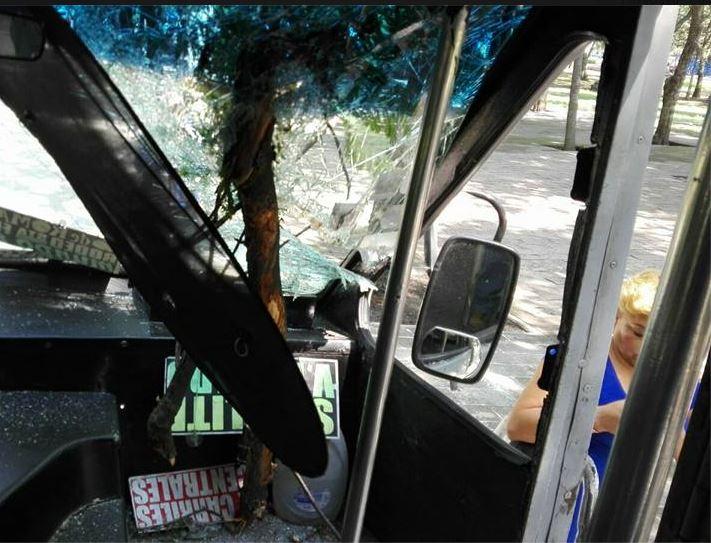 Microbus es atravesado por la rama de un arbol en reforma