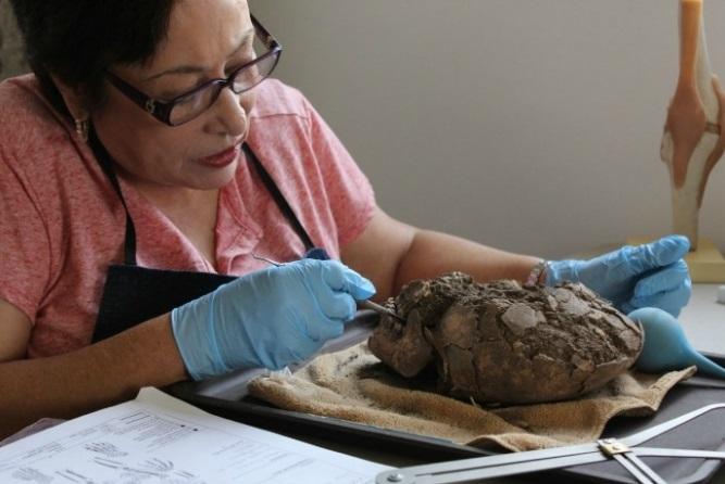 Expertos del INAH divulgan investigaciones sobre las momias de Sonora (Foto: elchiltepin.mx)