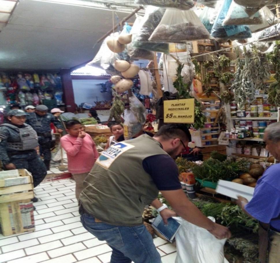 Operativo de Profepa en Michoacán