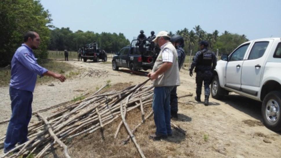Madera de mangle asegurada en tabasco