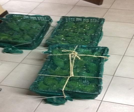 cientos de pericos son incautados en escuinapa