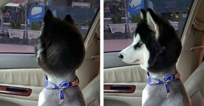 perro, rapado, calor, verano, perros
