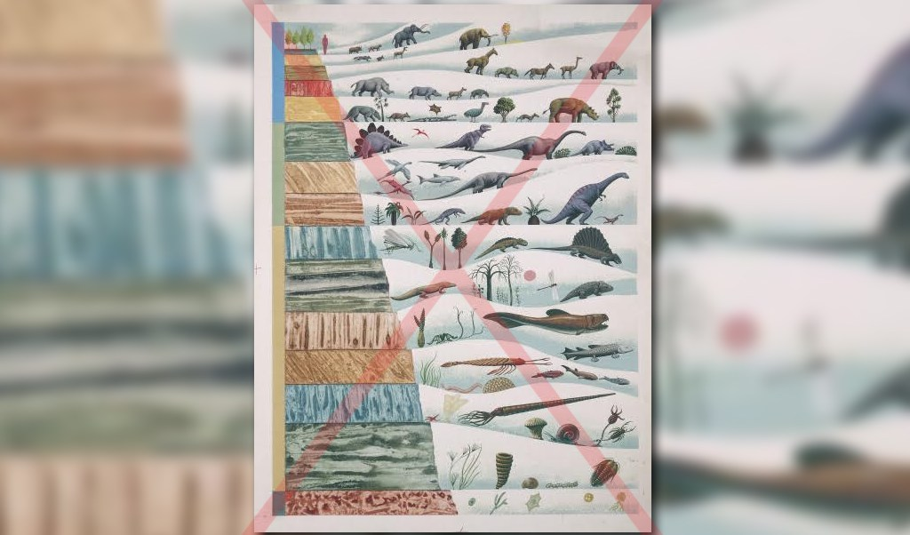 educacion basica de turquia no ensena teoria de la evolucion