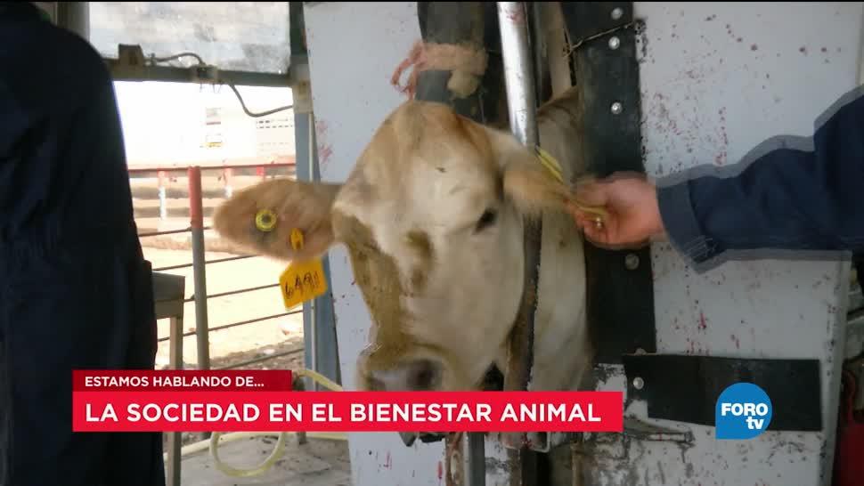 Ley, bienestar animal, Eduardo Santurtún, Facultad de Veterinaria Y Zootecnia