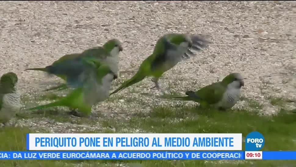 Autoridades ambientales, periquito, zonas urbanas, México