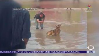 hombre, saca a pasear, río Sacramento, Chihuahua, felino