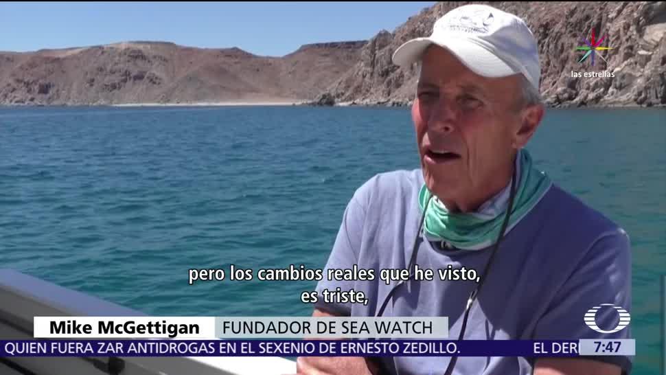 Especies, archipiélago Espíritu Santo, en riesgo