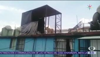 Cachorro léon, rescatado, azotea de La Merced, CDMX
