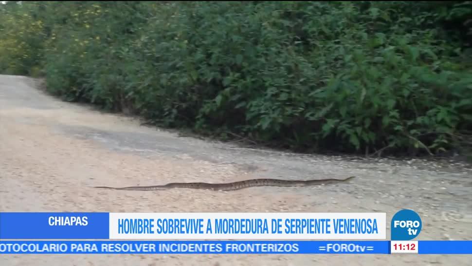 chiapaneco tojolabal, serpiente nauyaca, Recupera de una mordedura, Hospital Regional de Comitán