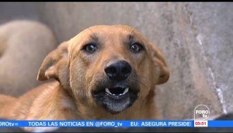 noticias, forotv, Emprenden, programa, cacería de perros callejeros, Edomex
