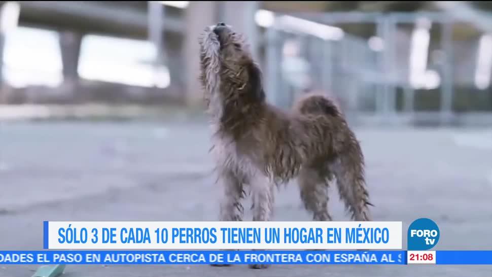 perros, callejeros, sin dueño, México, agresiones, ataques
