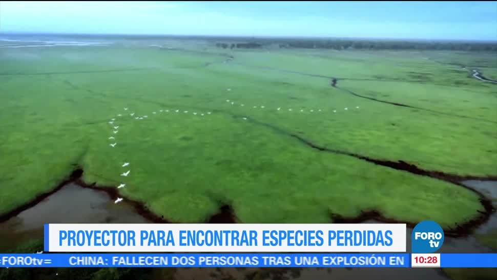noticias, forotv, Proyecto, encontrar, especies perdidas, Ximena Cervantes