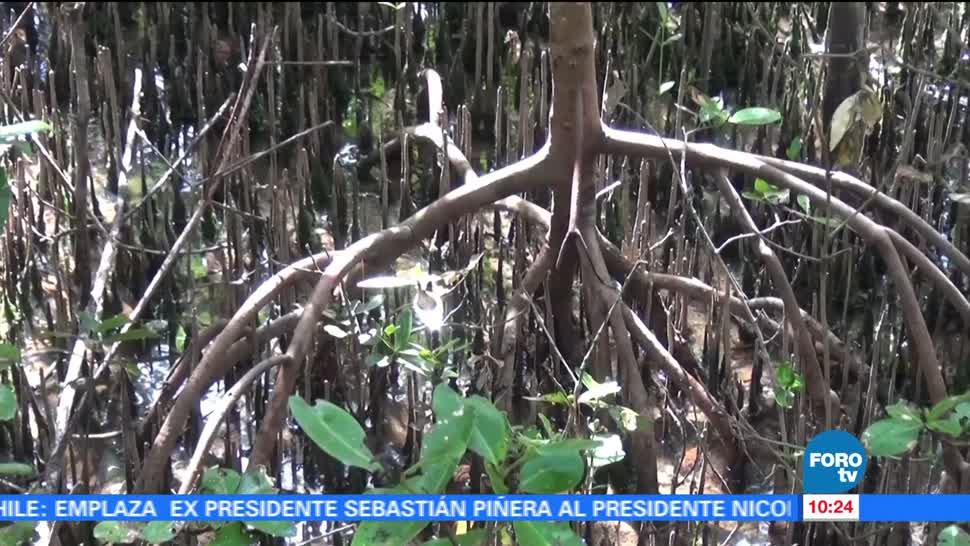 Deforestacion, Bosques, Selva, Campeche