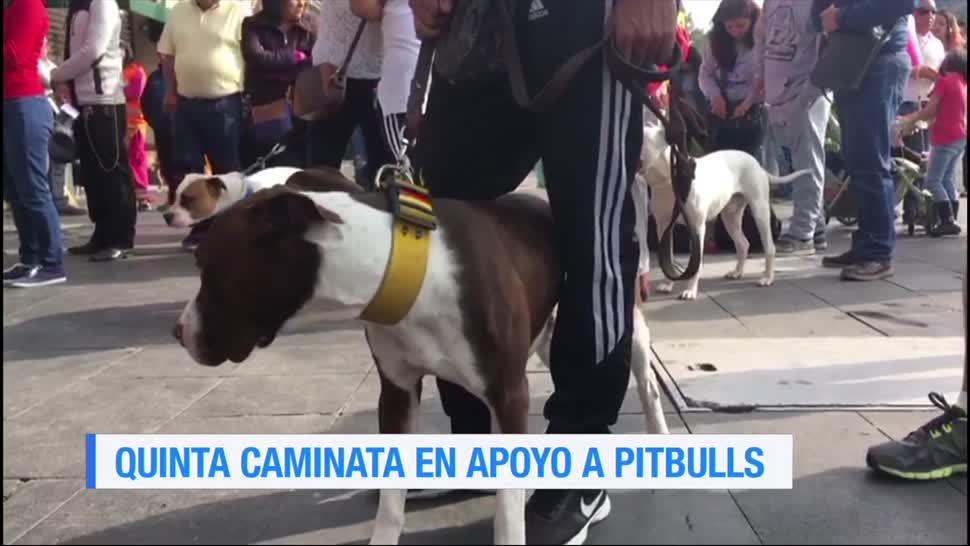 Quinta Caminata, Pitbullera, CDMX, Ciudad De Mexico