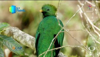 Planeta Quetzal Costa Rica Por El Planeta