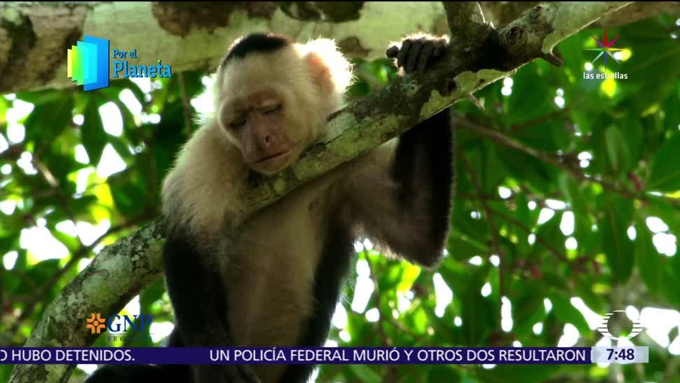 monos, Costa Rica, reyes, árboles