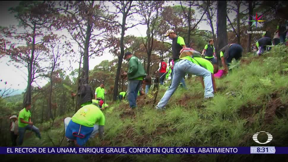Arranca Valle de Bravo Campaña Reforestación