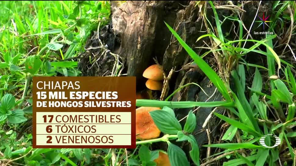 feria de hongos San Cristóbal Casas