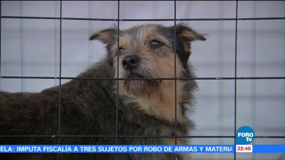 Realizan Adoptafest CDMX, proyecto adopción mascotas