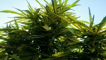 marihuana, nevada, gobernador, venta, escasez, emergencia