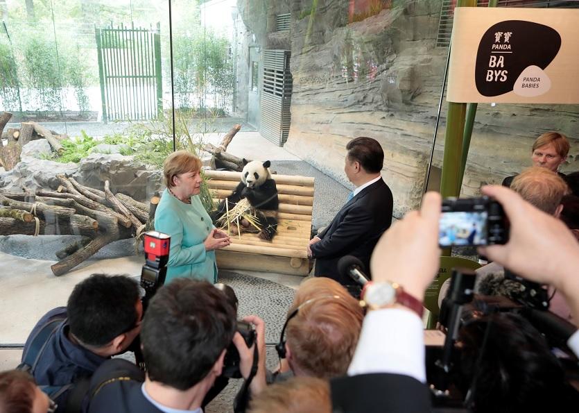 La canciller alemana Angela Merkel y el presidente chino Xi Jinping dan la bienvenida a los osos panda chinos Meng Meng y Jiao Qing en el Zoo de Berlín (Reuters)