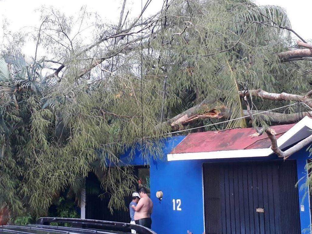Lluvia, Encharcamientos, Caída de árboles, Chiapas, Tapachula, Suministro, Red Eléctrica