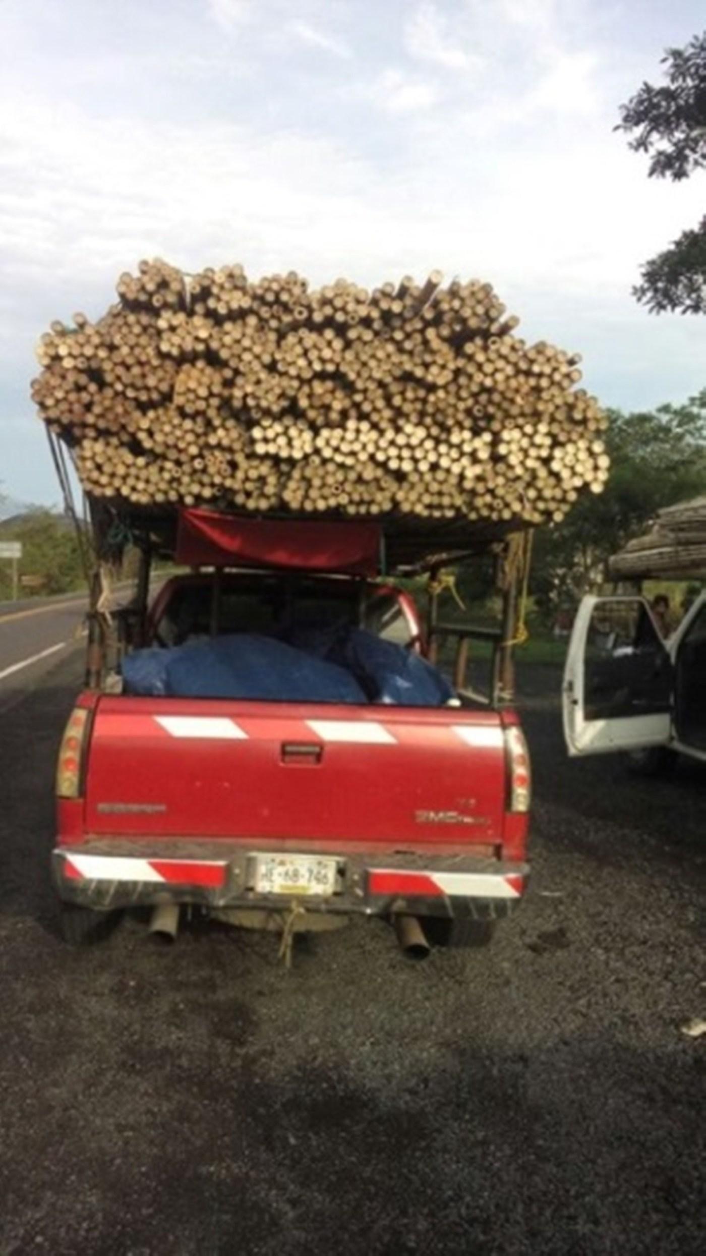 Aseguran en Nayarit bambú transportado ilegalmente