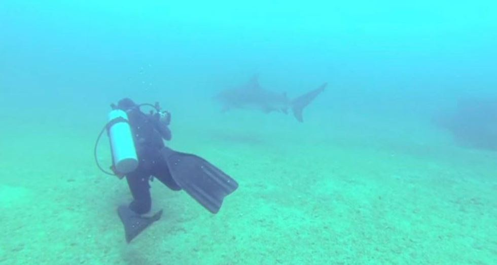 cabo pulmo, el encuentro cercano con tiburones en bcs
