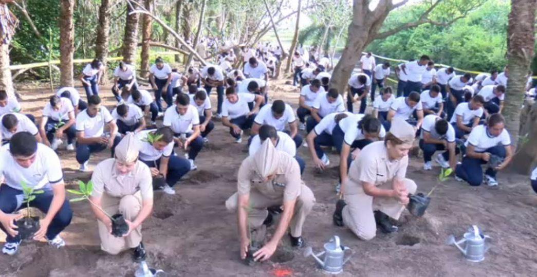 Cadetes de la Escuela Naval siembran mangles en Veracruz