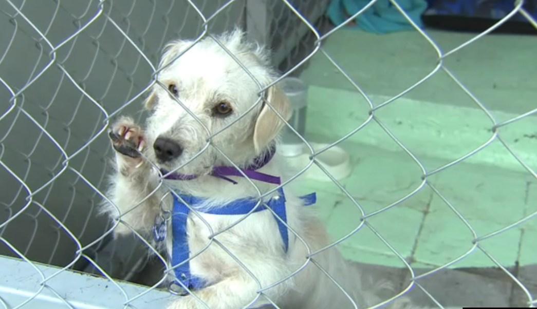 varios perros son rescatados en el metro de la cdmx