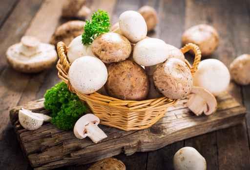 Hongos de invernadero son aptos para el consumo humano