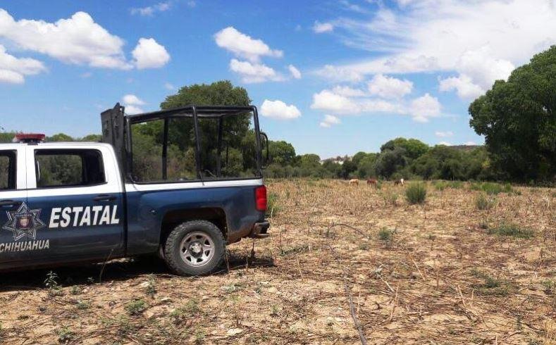 destruyen amapola en chihuahua