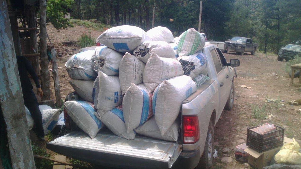 Decomisaron 6 toneladas de marihuana en Temósachi
