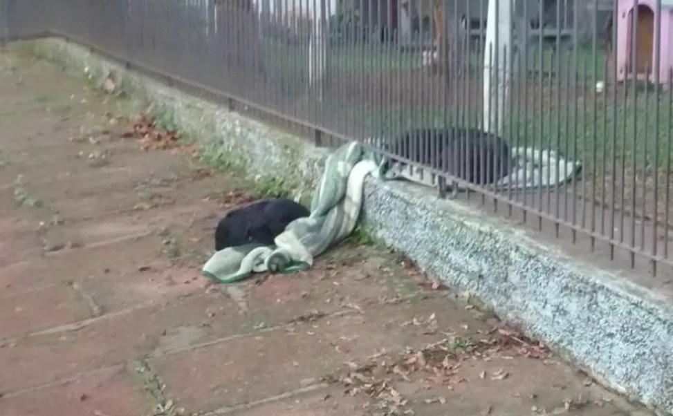 Lana, una perrita de 8 meses es vista en redes sociales como en un ejemplo de solidaridad (Foto: Globo)