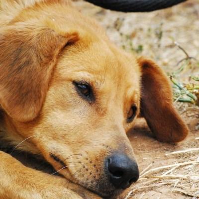 Envían a prisión a acusado de maltrato animal en CDMX