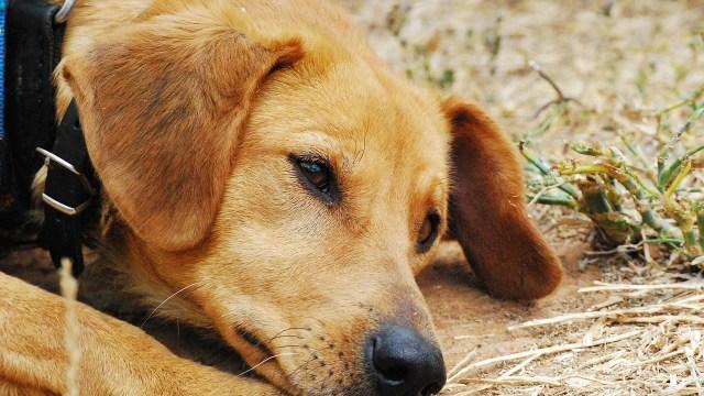 maltrato animal, crueldad animal, delito grave, medio ambiente