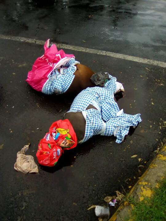 Perros muertos mundo patitas pitbull Coyoacán
