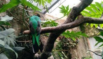 Quetzal Zoologico Tuxtla Chiapas Medio Ambiente Noticias
