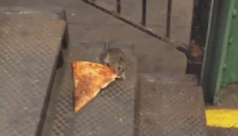 Ratas, plaga, Nueva York, basura, alcalde, veneno,