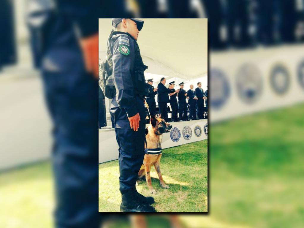 Llegan nuevos elementos a la Unidad Canina de la Policía Federal