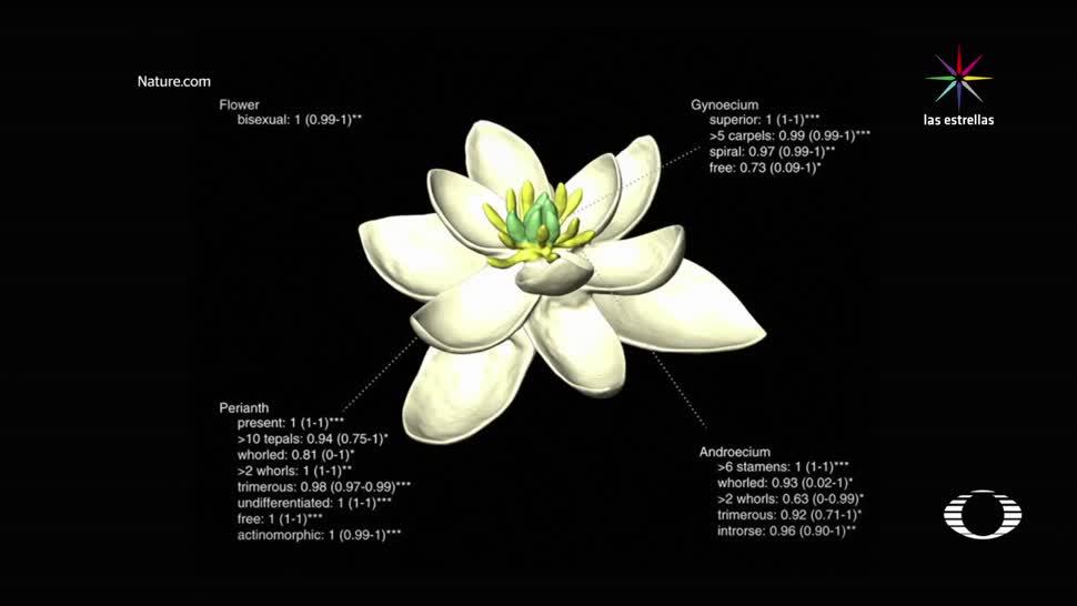 Científicos reconstruyen primera flor restos fósiles