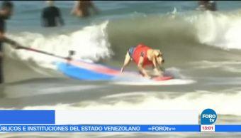 Realizan, campeonato, perros, surfistas