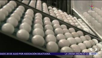 Holanda Alerta sanitaria Huevos Contaminados