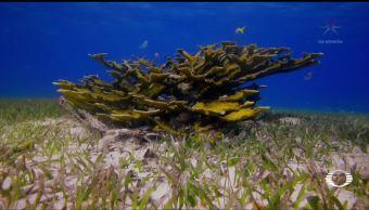 El inicio de vida de coral