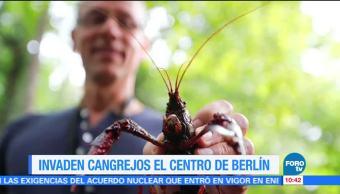 Invaden, cangrejos, centro, Berlín