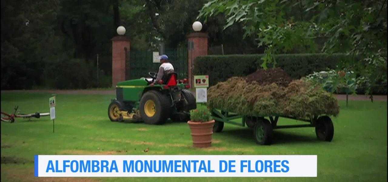 Alfombra, flores, realizada, Xochitla