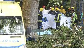 Un árbol centenario cae sobre procesión en Monte, Portugal