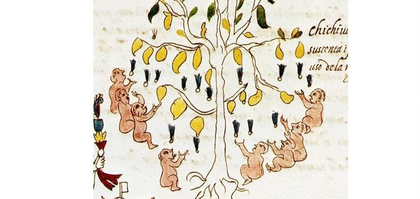 arbol, chichis, senos, aztecas, bebes