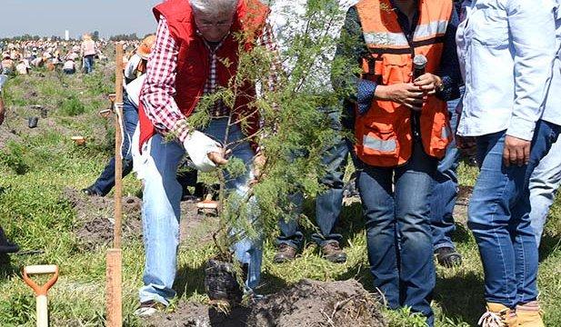 Concluye la primera etapa de reforestación en el NAIM
